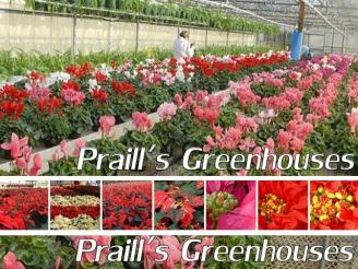 Oral B Rechargeable Toothbrush from Datasar Inc. Sarnia.
