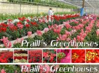Gift certificate for a 4 wheel alignment. Parts extra. Customized suspension systems may be extra. * Located at the corner of London Road and Vidal Street in central Sarnia. Cameron Service specializes in all the repairs and tune up needs for your automobile. From oil change & the tire rotation and balance to brakes & alignment, Doug handles them all.